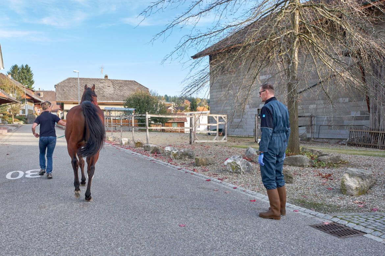 Pferde_10_neu.jpg